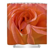 Looking Good Rose Shower Curtain