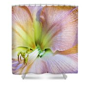 Looking Into Lavender Shadowsi Shower Curtain