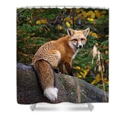 Looking Pretty Foxy Shower Curtain