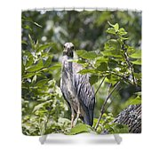 Looking Right At You Shower Curtain