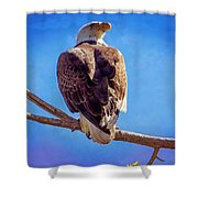 Looking Right Shower Curtain by Bob Hislop