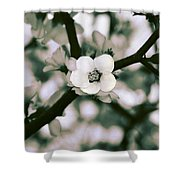 Looking Through The Blossoms 2 By Kaye Menner Shower Curtain