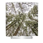 Looking Up At Snow Covered Tree Tops Shower Curtain