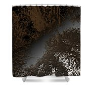 Looking Up Through Copper Forest Shower Curtain