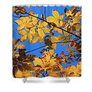 Looking Up To Yellow Leaves Shower Curtain