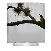 Lookup Shower Curtain