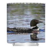 Loon And Reflection Shower Curtain