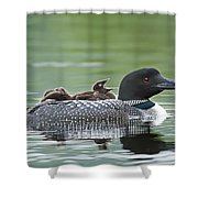 Loon Chick - Big Yawn Shower Curtain