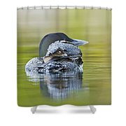 Loon Chick- Feather Hat Shower Curtain