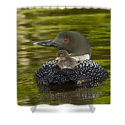 Loon Chick Rides On A Parents Back Shower Curtain