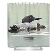 Loon Chick Sticks Close To Parent Shower Curtain