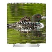 Loon Chicks - Best Buddies Shower Curtain