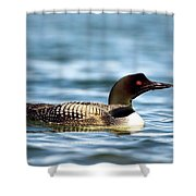 Loons 7 Shower Curtain