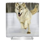 Loping Shower Curtain