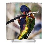 Lorikeet Bird Shower Curtain