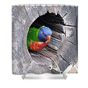 Lorikeet - Peek-a-boo Shower Curtain