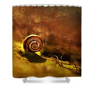 Lost Shell Shower Curtain