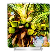Lots Of Coconuts Shower Curtain