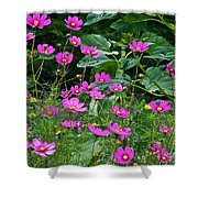 Lots Of Cosmos Shower Curtain