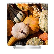 Lots Of Little Gourds Shower Curtain