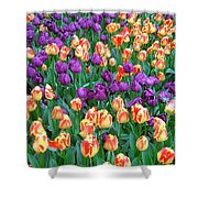 Lots Of Tulips Shower Curtain