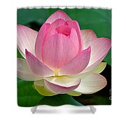 Lotus 7152010 Shower Curtain