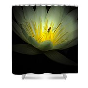 Lotus And Bee Shower Curtain