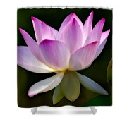 Lotus And Buds Shower Curtain by Susan Candelario
