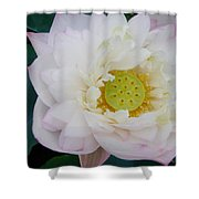 Lotus Blooming Shower Curtain