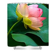 Lotus Blossom And Leaves Shower Curtain by Byron Varvarigos