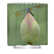 Lotus Bud And Dragonfly Shower Curtain