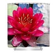 Lotus Cloud Shower Curtain