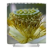 Lotus Detail Shower Curtain