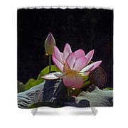 Lotus Enchantment Shower Curtain