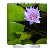 Lotus Flower And Lily Pad Shower Curtain