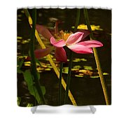 Lotus Flower At The West Lake Shower Curtain
