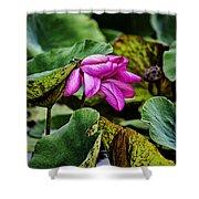 Lotus Flower- Gungarre Billabong Shower Curtain