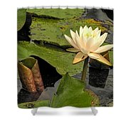 Lotus Flower In White Shower Curtain
