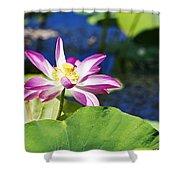 Lotus Flower V6 Shower Curtain