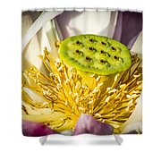 Lotus Heart Shower Curtain