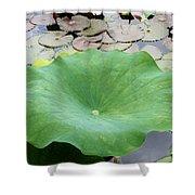 Lotus Leaf Shower Curtain