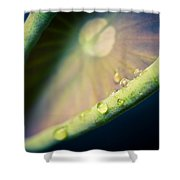 Lotus Leaf Unfurling Shower Curtain