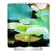Lotus Lilly Pond Shower Curtain