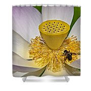 Lotus Pollinator Shower Curtain