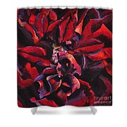 Louis Xiv Rose - Beauty Shower Curtain