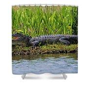 Louisiana Gator Shower Curtain