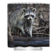 Louisiana Raccoon II Shower Curtain