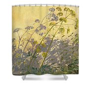 Lovage Clematis And Shadows Shower Curtain