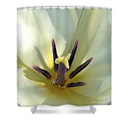 Love Grows Within Shower Curtain