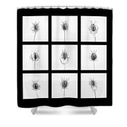 Love In A Mist 3 Shower Curtain